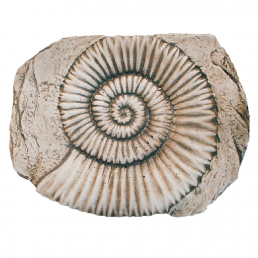Fossilized Shell 38cm ornament stone art