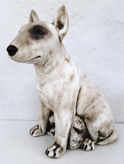 English Bull Terrier 46 cm tall