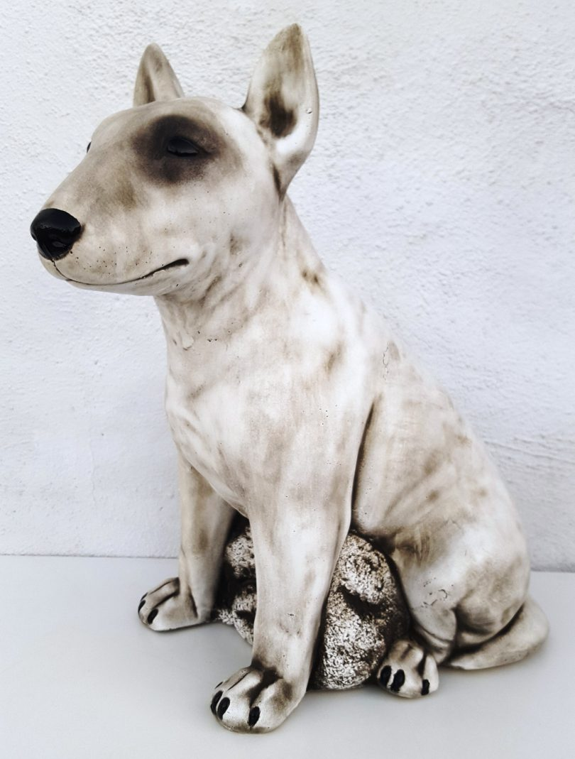 English Bull Terrier 46 cm tall